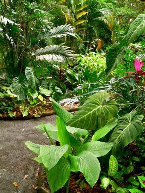 sun tropical plants 25 b 228 sta rainforest plants id 233 erna p 229