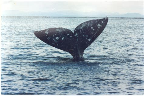 Shocking Report Suggests Yahoo Is Profiting From The - whale tails images usseek
