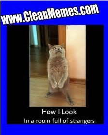 Awkward Cat Meme - jeeves cat meme memes
