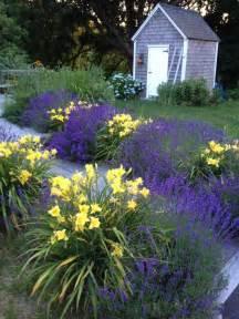 lavendel garten 25 best ideas about lavender garden on