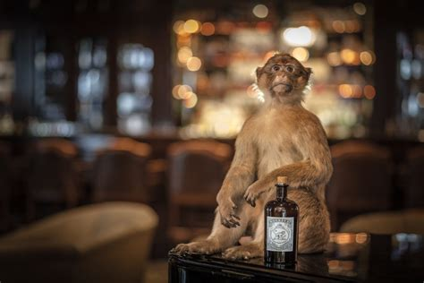 monkey   gin  story   arrival  delhi