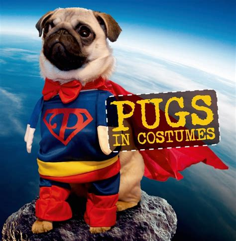 book of pugs pugs in costumes book giveaway 11 27 emily reviews