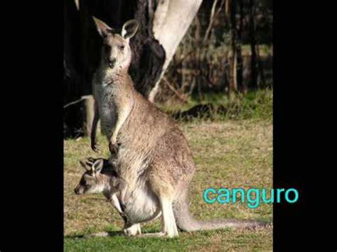 imagenes sensoriales y animicas los animales mam 205 feros dom 201 sticos y salvajes youtube