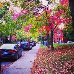 Dundonald Park #ottawa #canada #fall #autumn #park #nature Flickr