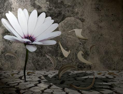 imagenes surrealistas goticas rosas negras