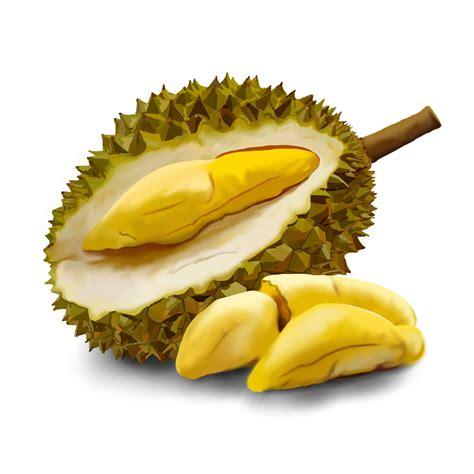 buah buahan kantong 701 durian png