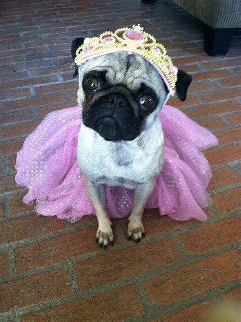 princess pug princess pug lol