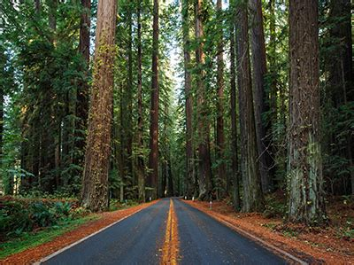 what animals live in the redwood forest? | trails.com