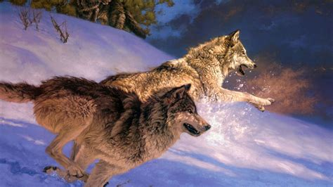 wolf s wolf hd wallpapers