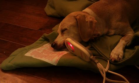 puppy breathing through nose the nunya cancer journal our experience with cancer