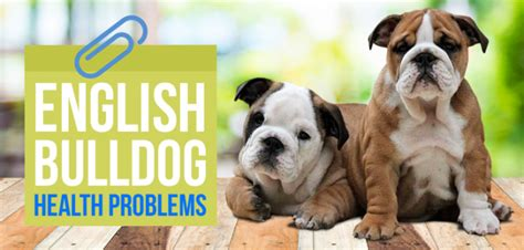 7 Health Conditions That Hit Dogs by Search Result For Puppies Dogs Breeds