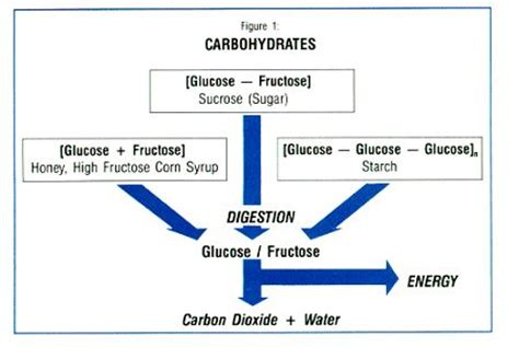 carbohydrates function biology carbohydrate function macromolecules the o
