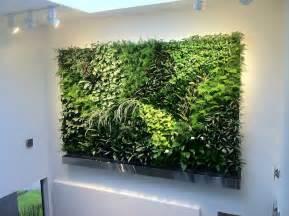 interior plant wall living walls green plant and vertical garden walls