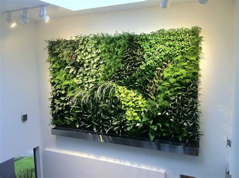 interior plant wall living walls green plant and vertical garden walls