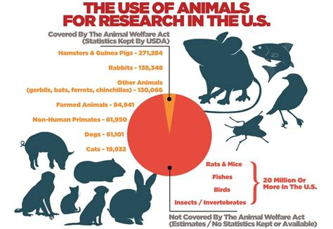 animal testing statistics best 25 animal testing statistics ideas on pinterest