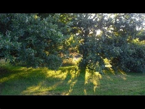 4 hours natural sounds morning birds singing no music
