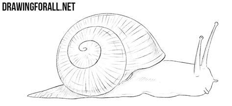 draw  snail drawingforallnet