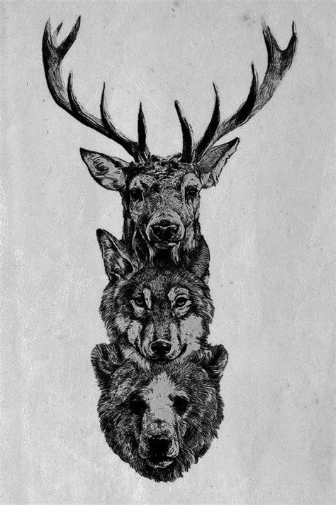 deer wolf and bear illustration illustrations pinterest