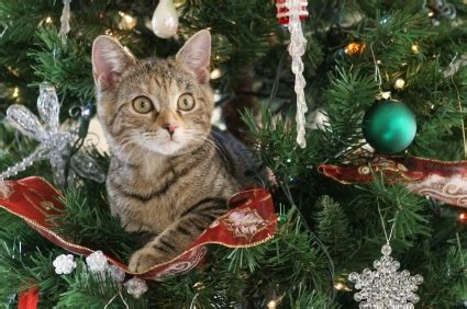 cat on top of christmas tree meme buon natale a 6 ze il di pethotels it
