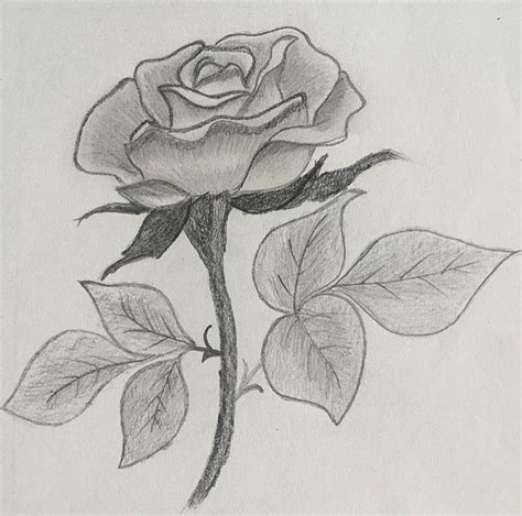 shaded rose drawing by azraa khuzema