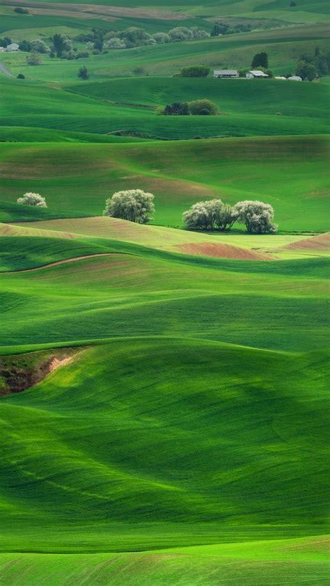 wallpaper grassland landscape greenery scenery huawei