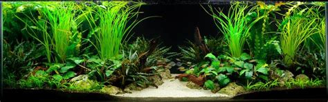 aquarium design group llc aquarium design group a two sided live planted aquarium