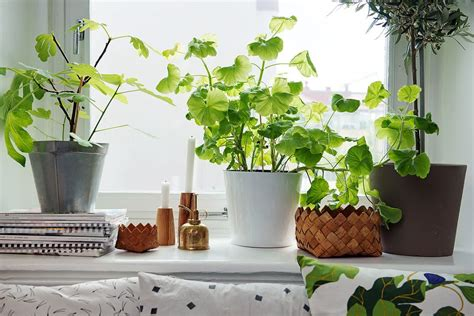 plants for apartments 4 best indoor plants for apartments that purify air and