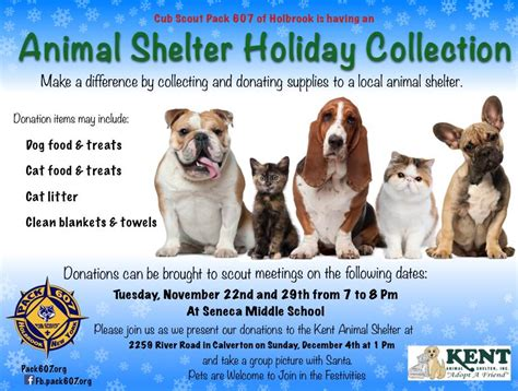 local pound local animal shelter collection sachem report