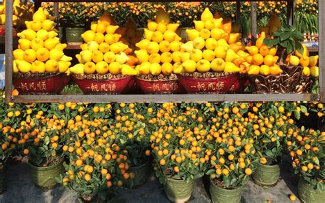 new year flower market 2016 go bananas this new year