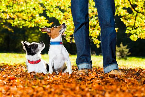 how to dogs to sit diy some superb tips and tricks on how to your to sit