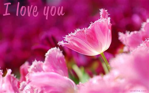 wallpaper flower romantic top 14 amazing valentines day wallpaper 2014 sevelina