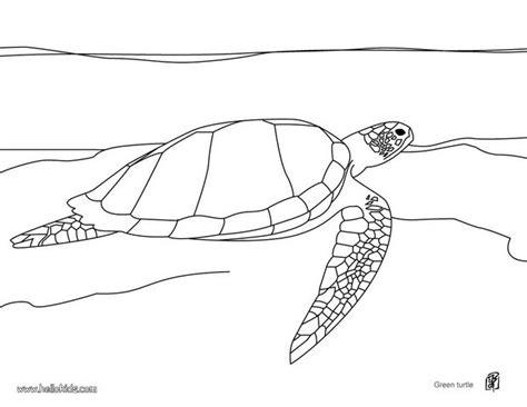 coloring pages loggerhead turtle loggerhead sea turtle coloring page www pixshark com