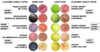 types of figs pictures