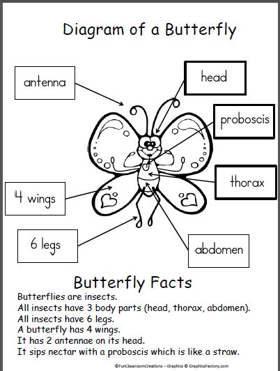 diagram of a butterfly butterfly diagram diagram students and pre school