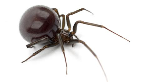 house spider brown recluse spider horizons pest control pest control service in birmingham al