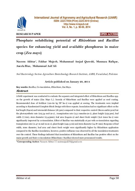 maize research papers phosphate solubilizing potential of rhizobium and bacillus