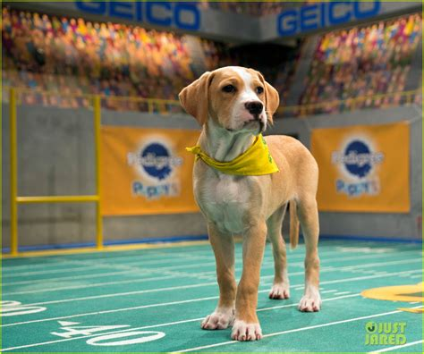 puppy bowl 2017 puppy bowl 2017 meet the dogs the more photo 3853440 2017