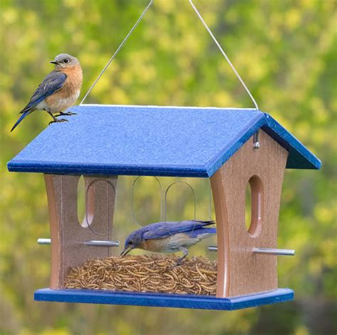 Bluebird Feeder Duncraft Eco Mealworm Feeder