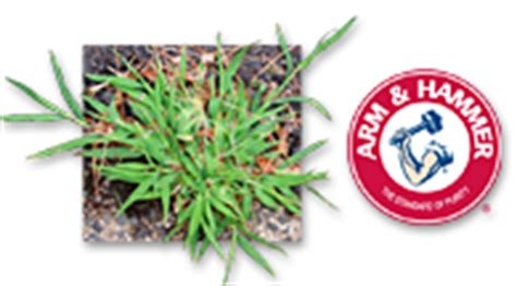 killing crabgrass with baking soda identify lawn problems weeds insects grass fungus