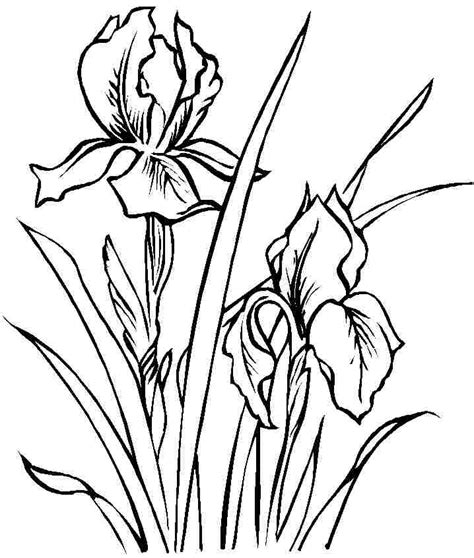 Coloring Pictures Of Iris Flowers | coloring sheets iris flowers free printable for little