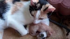 newborn kittens newborn kittens youtube