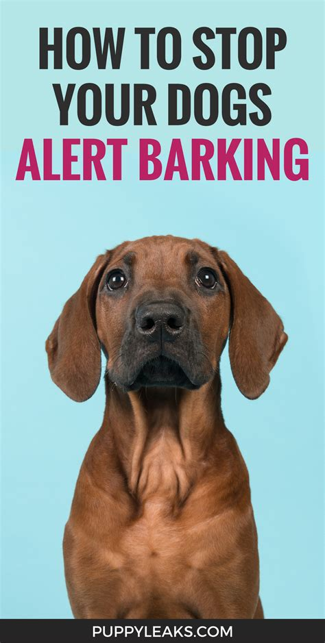 how to get dog to stop barking the nifty trick that stopped my dogs alert barking puppy leaks