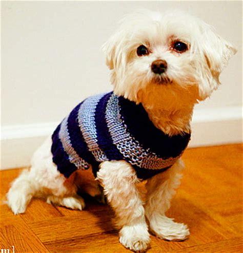 knitting pattern dog jersey miss julia s patterns free patterns 20 dog sweater