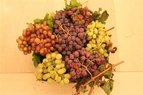 vivai uva da tavola 20 176 congresso nazionale dell uva da tavola agronotizie