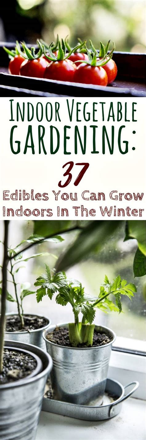 vegetables you can grow inside indoor vegetable gardening 37 edibles you can grow