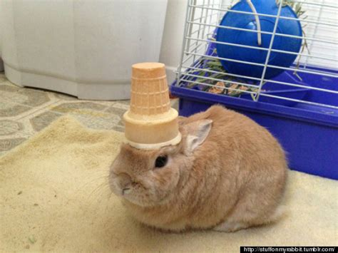 pictures of stuff stuff on my rabbit is our new favourite thing on