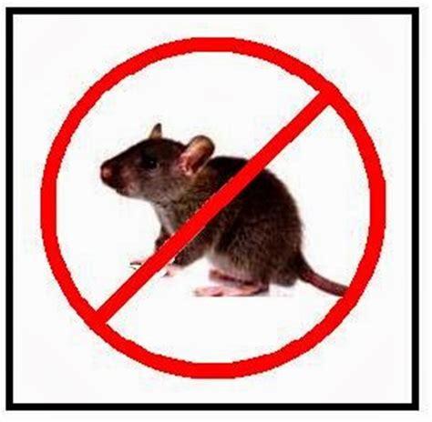 cara membuat jebakan tikus di rumah diway 5454 cara mengusir tikus di rumah