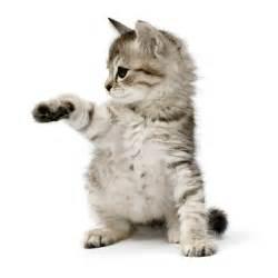 Adopting A Cat   My Cat Space Cat