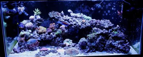 Aquascaping Live Rock Ideas The Importance Of Water Flow And Movement Reef Aquarium