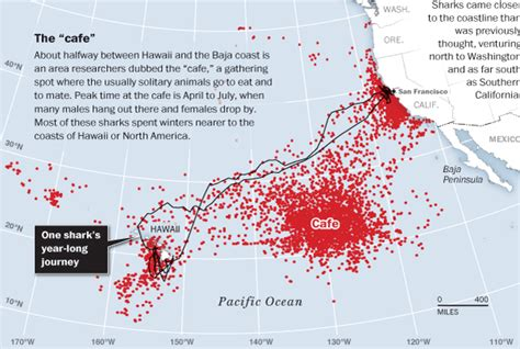 shark attack map california great whites near shore more often than believed cervantes